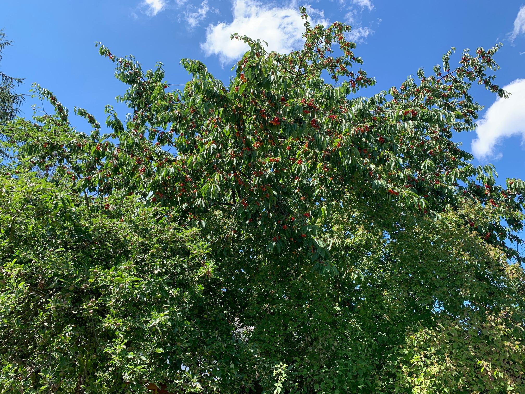 Baumkrone und blauer Himmel